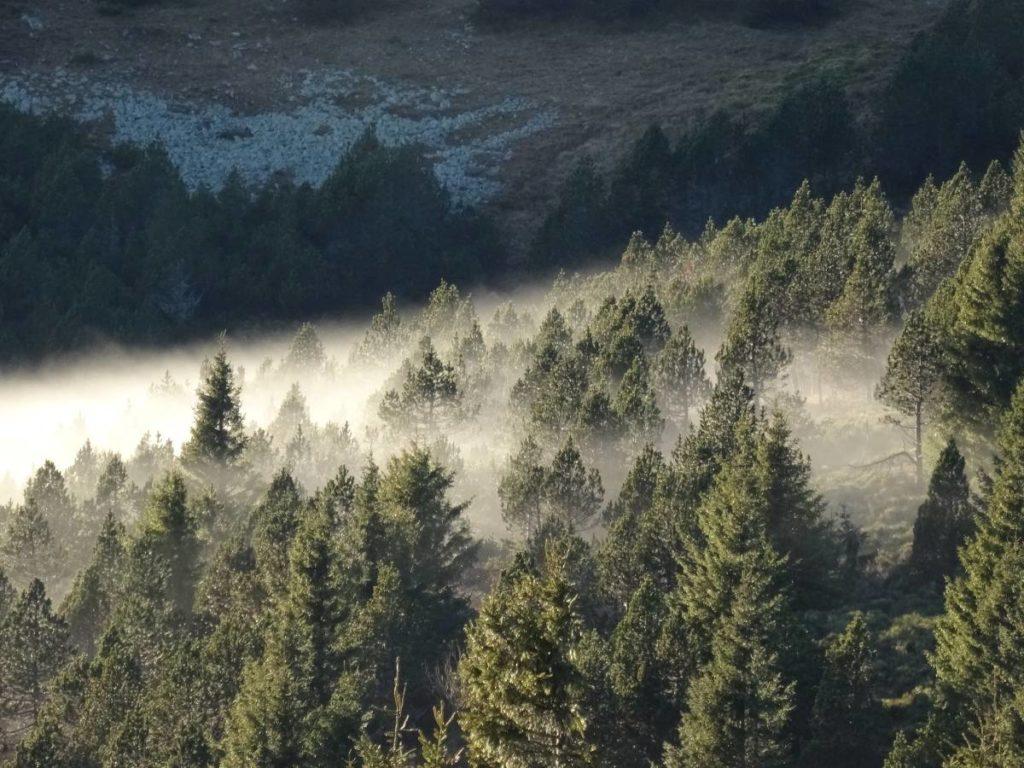 foret dans le brouillard sur le mont Lozère